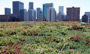 Green-roof-epa-building-denver