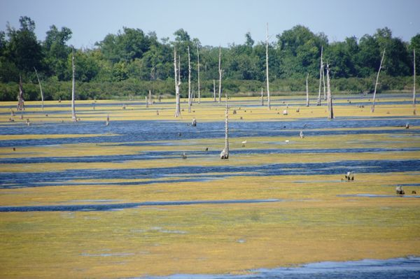 2 June alge on Bayou