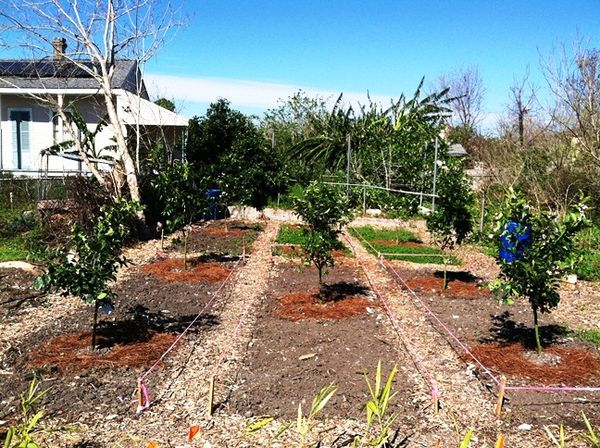 Orchard Planted