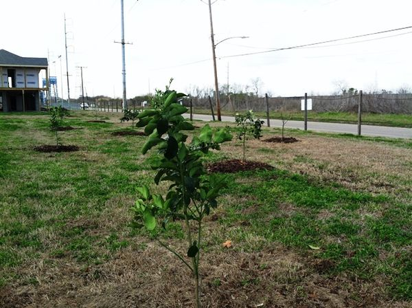 CSED Florida Avenue Community Orchard Resized