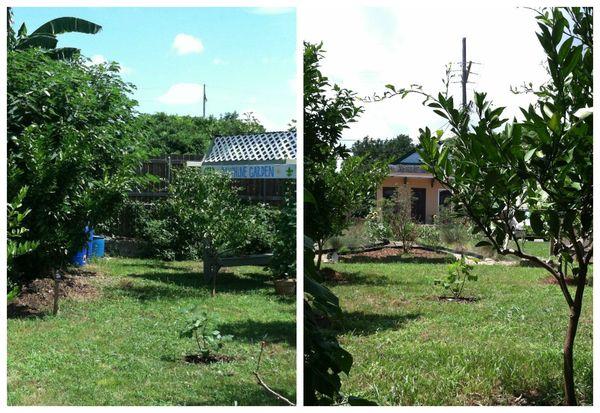 Dauphine Garden Fig Collage